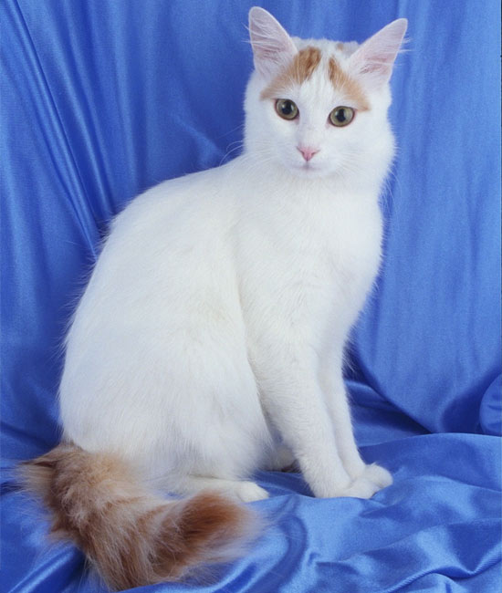 http://www.skinsfinx.ru/data/pictures/Image/images/turkishvan/4.jpg